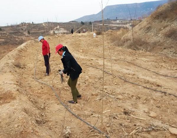 锦州果树小管出流工程