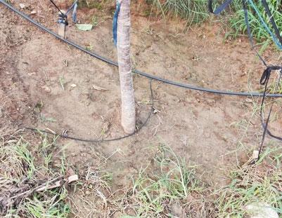 滴灌带厂家山地果树滴灌小管出流